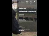 Repubblica Verde animal studies и зоозащита