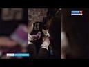 Пожарные в Башкирии спасли котенка, просидевшего на дереве три дня