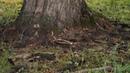 В гостях у Лены в Чесноковке идем из леса возле конезавода 03 08 2019 г 007