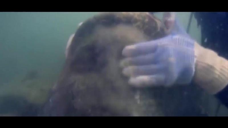 Этот артефакт ошарашил дайверов В подводных пещерах найден череп с вживленым микроимплантом