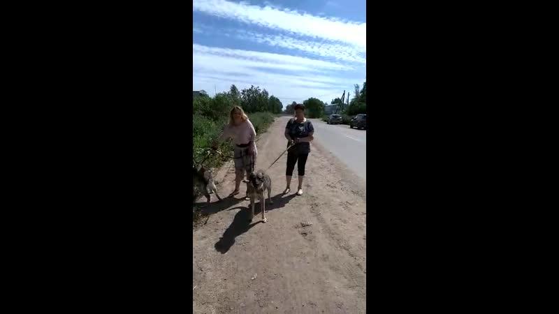 Берт и Мухтар на прогулке с опекунами 22 06 19
