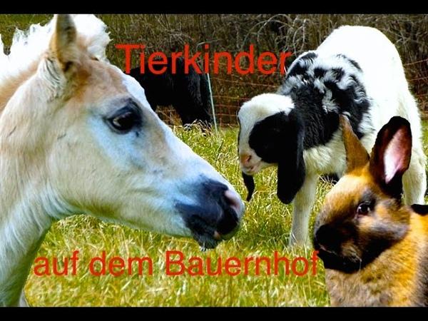 Tierkinder auf dem Bauernhof Süße Kälber Fohlen Lämmer Ferkel und Küken Kinderfilm Tiere HD