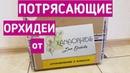 ПОТРЯСАЮЩИЕ ОРХИДЕИ от Оксаны Астрахань| орхидея orchid orchids почтой по почте
