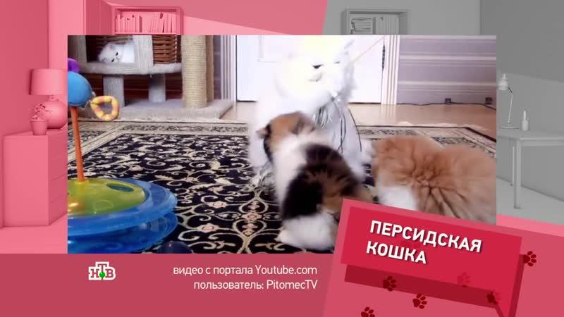 Кто в Доме хозяин Разлад в доме из за кошек