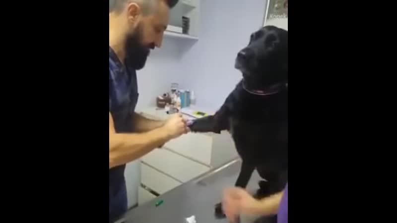 Храбрый собачка