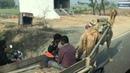 Дорога Агра-Вриндавана.Едем в Храм Любви (Храм Прем Мандир Prem Mandir Temple)