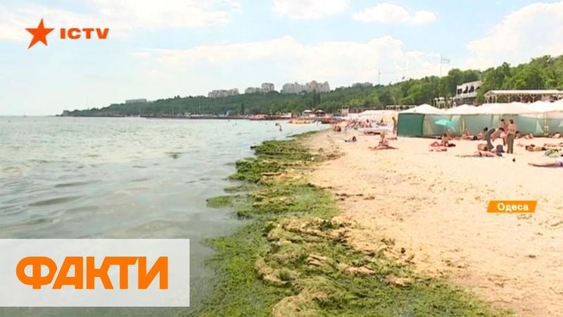 Зеленое море в Одессе чем опасно и когда можно купаться