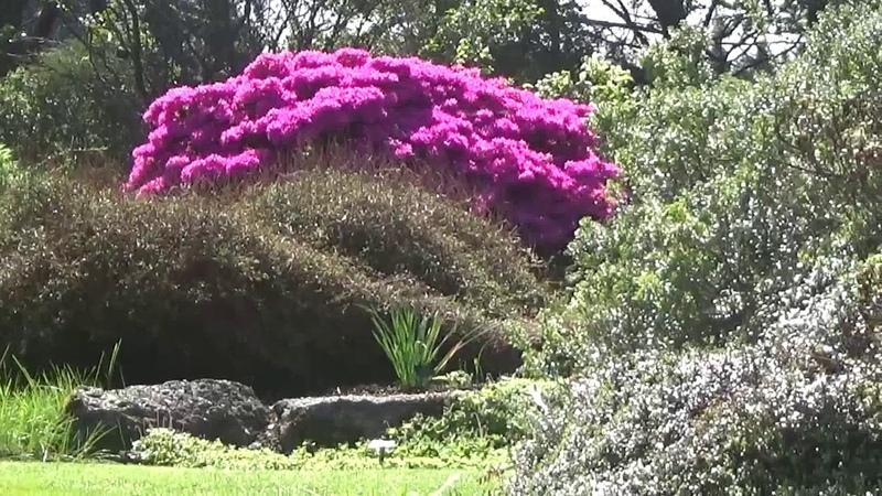 Botanical Gardens, Edinburgh, Scotland - Part1