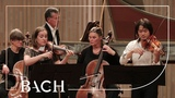 J. S. Bach - Concerto for two violins in D minor BWV 1043 - Sato Netherlands Bach Society