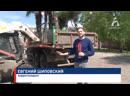 Красноярск готовится к лету пальмы и туи развозят по городу