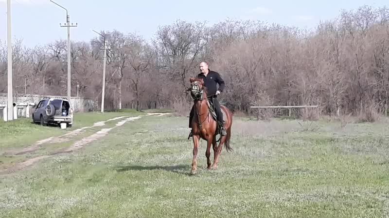 конь Атаман мужКазак дочкаДжигитка