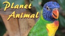 Beautiful Animal Planet, National Geographic Latest New Updated 2019 4K Video 😻🐦🐥 SNO BIRD