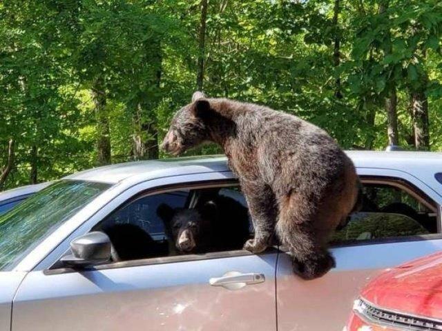 Мишки в автомобиле