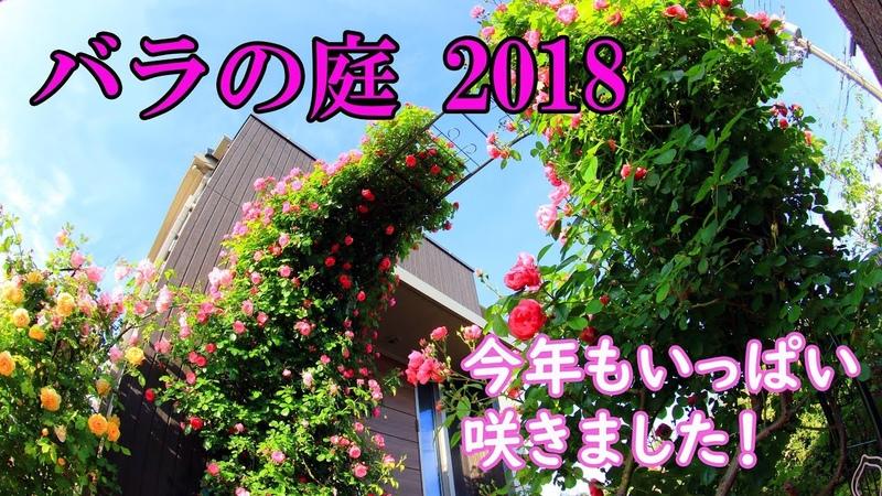 2018年5月今年もバラの庭は満開です♪
