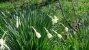 Весна пришла 🌹 🌼 💐 🌸 🌷 🍀 🌺 🌻