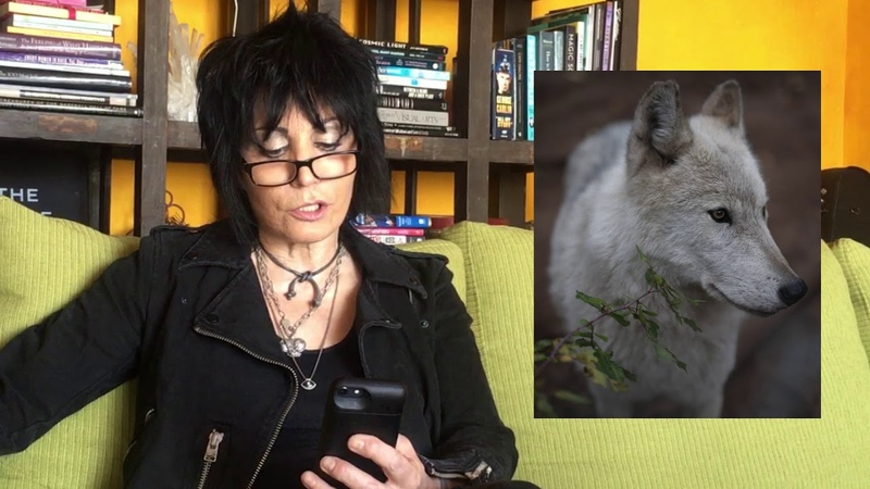 Joan Jett Shares Her Voice for W.O.L.F. Sanctuary