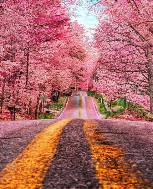 Прекрасный сезон в Фостере, Род-Айленд, США