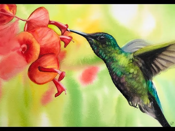 Hummingbird Painting in Watercolor Wet on Wet Background