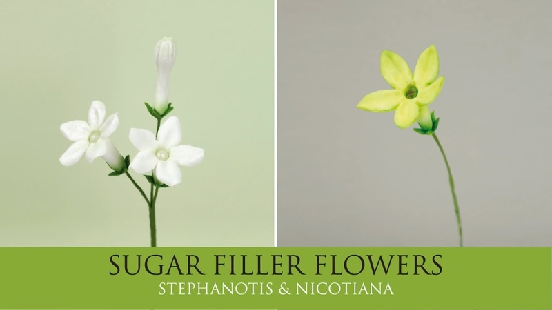 How to Make Stephanotis Nicotiana Sugar Filler Flowers Part 2
