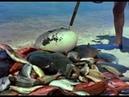 (Extrait) LE MONDE DU SILENCE - Jacques-Yves Cousteau, Louis Malle - 1955