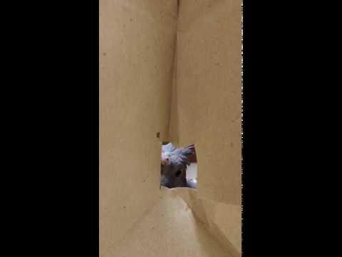 Birdie Plays Peekaboo Through Travel Bag || ViralHog