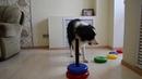 Моя собака Баста собирает пирамидку/Дрессировка собак/Забавные трюки