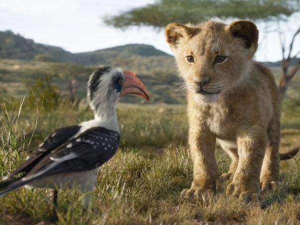 Disney не выдвигал «Короля Льва» на «Золотой глобус» как мультфильм Об этом в своем «твиттере» рассказал журналист The Playlist Грегори Эллвуд. По его информации, такое решение было принято