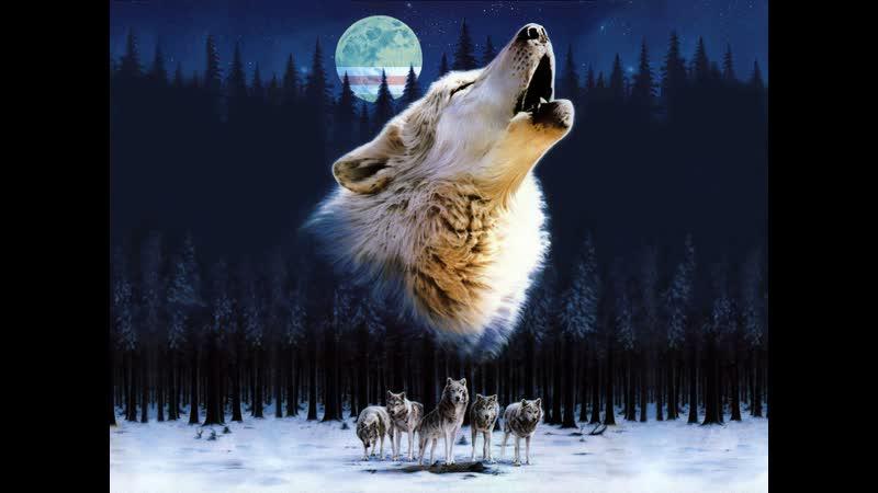 Пилип Паниройц Белые волки
