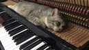 SAD PIANO MEOWSSAGE in the evening