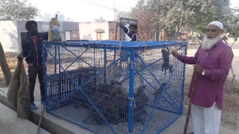 Ловец обезьян. Индия.