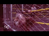 Aleister Black vs. Johnny Gargano Steel Cage Match WWE NXT 121918 - Highlights