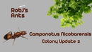 Camponotus Nicobarensis Colony Update 2 - A New Year Ahead