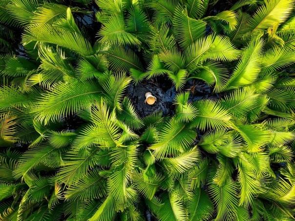 Пальмовый лес, Вьетнам.