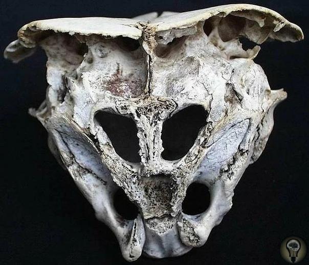 Древний череп, происхождение которого вызвало много вопросов