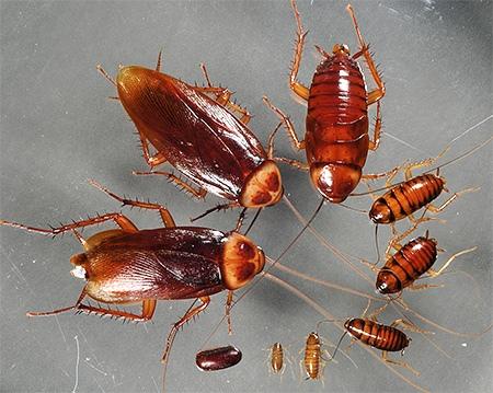Как выбрать лучший контроль насекомых?