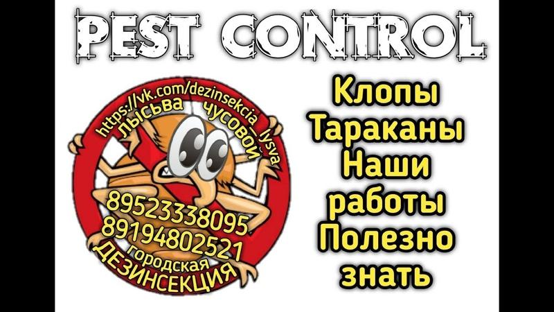 Полезно знать Квартира до и после нашей обработки от клопов и тараканов Дезинсекция Лысьва Чусовой
