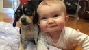 Adorable Babies Playing With Dogs and Cats - Cutest and Funniest Babies Compilation