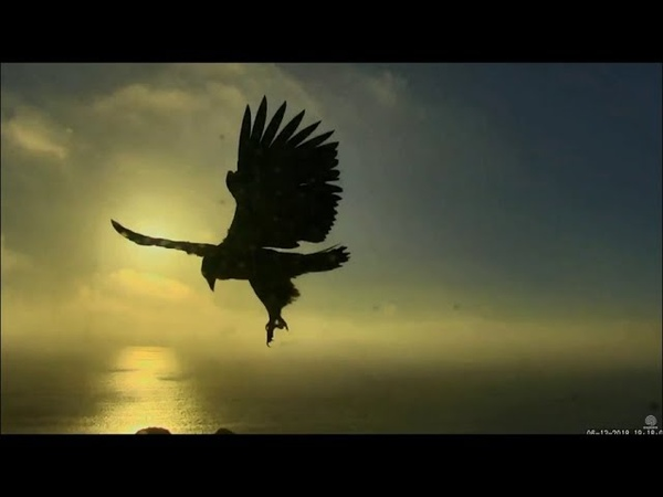 West End Catalina Eagles ~ Aria's Hover ~ It Doesn't Get Any Prettier Than This 6.13.18