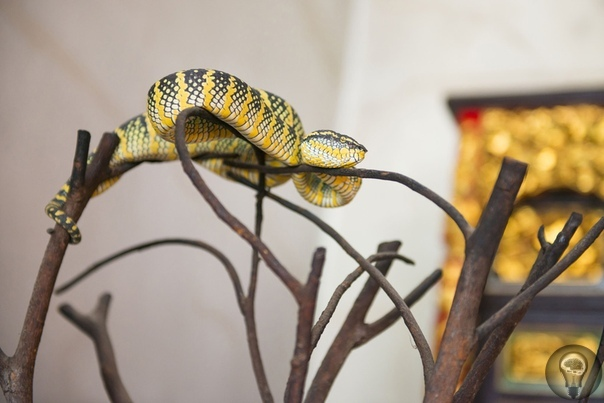 Необычные храмы: почему люди преклоняются перед крысами и змеями