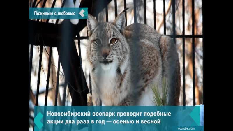 В зоопарк будут пускать пенсионеров бесплатно