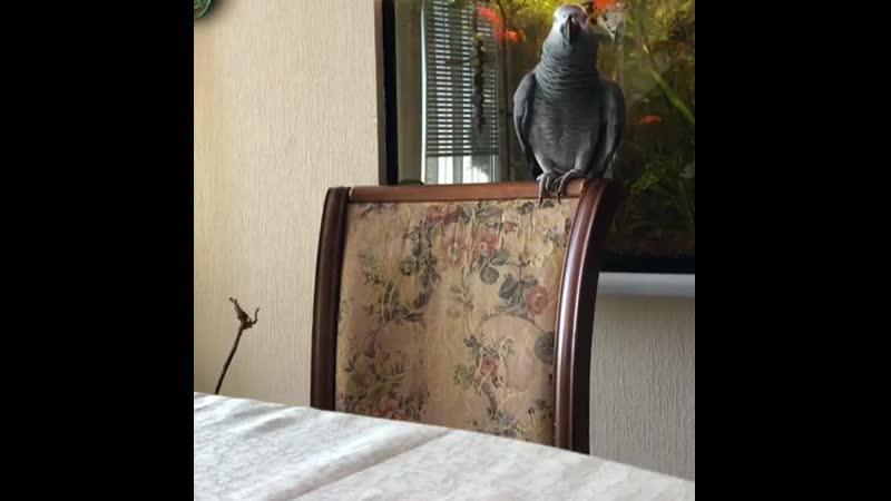 Весёлый попугай ,, Ух !
