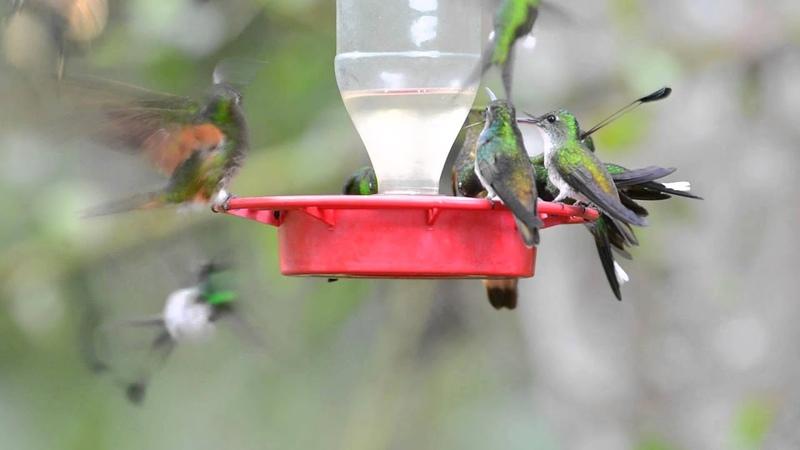 Tandayapa Bird Lodge Hummingbird Feeder
