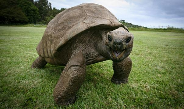 Черепаха Джонатан на фото в 1902 году и сегодня