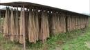Niptani Ainu Cattail Mattress Weaving Culture The Habitat Restoration