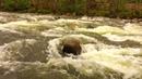 Аффирмации на деньги. Мощные аффирмации для привлечения богатства. Золотая река КАЛТАМАР