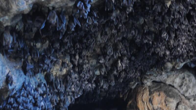 пещера летучих мышей в храме Гоа Лавах