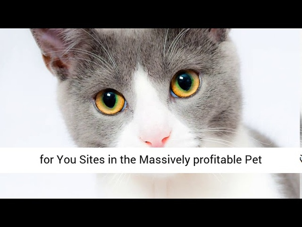Amazon Affiliate Pets Niche Content