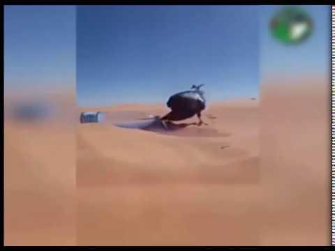 شاهد ماذا فعل شاب جزائري في قلب صحراء الجزا