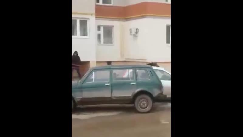 В Башкирии женщина прогнала заблудившегося лося броском кота.