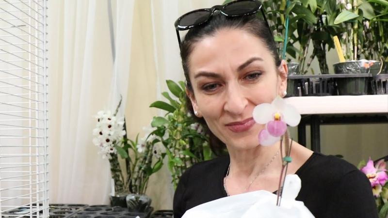 Цветочный Шопинг Выбираю Мои Орхидеи Эпизод 28 Семейный Влог Эгине Heghineh